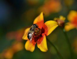 10 Tipps für einen insektenfreundlichen Garten